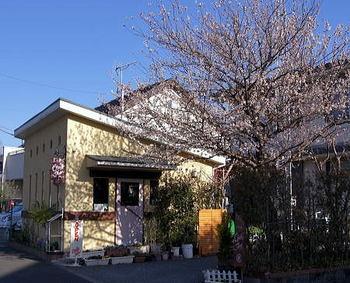桜咲くチャティーフォー 450.jpg